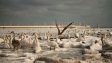Zima nad morzem (Witek z Pomlewa)