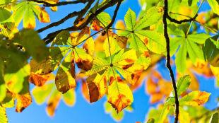 Jesień zapisana w liściach. Gdzie jest najwcześniej?