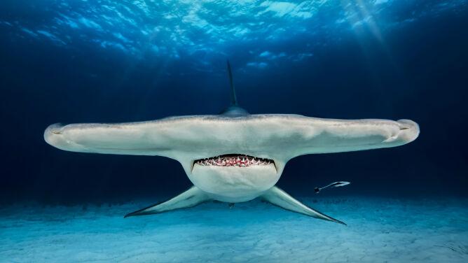 Rekin jest coraz bliżej, a w głowie myśl: uspokój się. Polak nagrodzony w konkursie