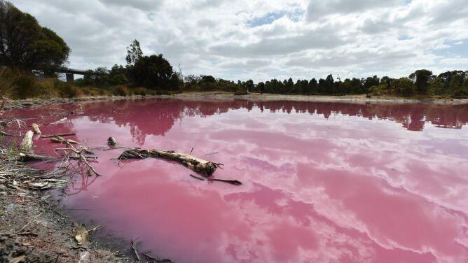 Woda w jeziorze zabarwiła się na różowo