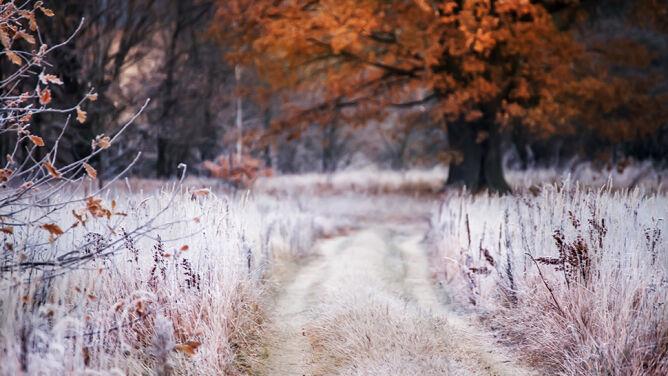 Pogoda na pięć dni: dwa potężne układy nad Polską. Aura podzieli kraj